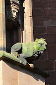foto of gargoyles  - Lion style gargoyle or liongoyle no so fierce but doing his job - JPG
