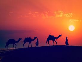 image of camel  - Vintage retro effect filtered hipster style image of  Rajasthan travel background  - JPG