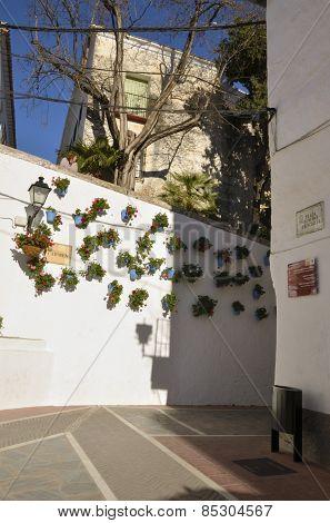 Geranium Pots  In Marbella Street