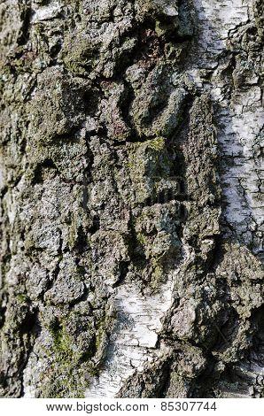 One Tree Stamm