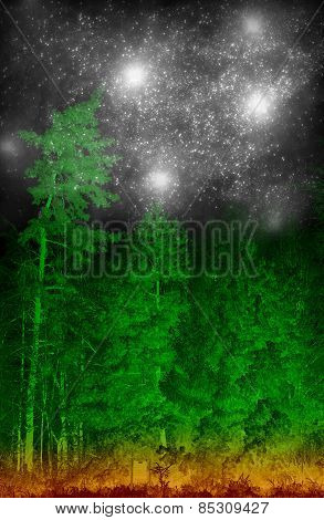 Magic Green Coniferous Forest