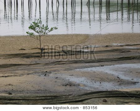 Lone Plant in barren sand - space for copy