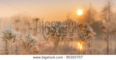 Winter in the fields and meadows