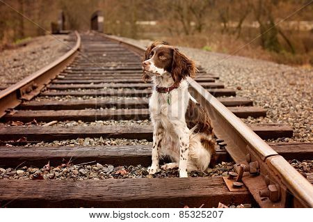 Young Brittany on Railroad Tracks