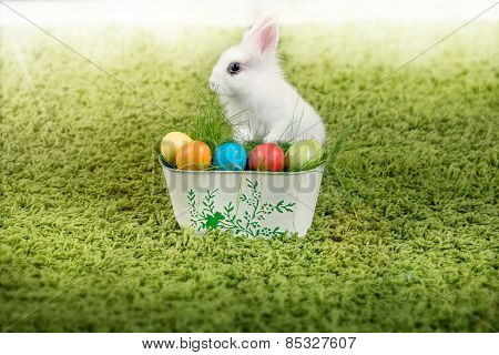 Funny little rabbit and Easter eggs