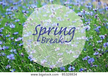 Spring break concept. Beautiful cornflowers in the field