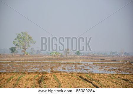 Rice fields full of mud prepared for new planting, in early morning with fog
