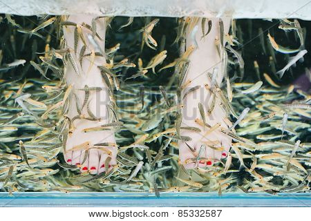 Fish Spa Pedicure Wellness Skin Care Treatment With The Fish Rufa Garra, Also Called Doctor Fish, Ni