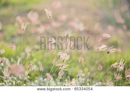 Camomiles On Summer Field Closeup