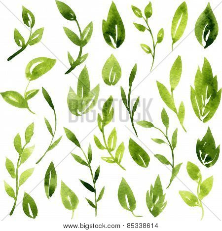 vector watercolor green leaves and branches