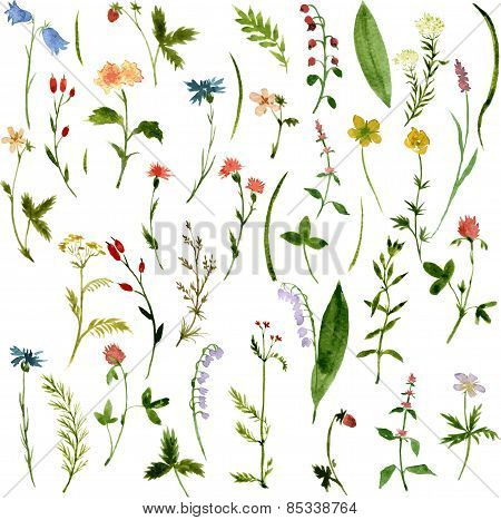 Set of watercolor drawing herbs and flowers