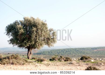 Nature Travel In Israel