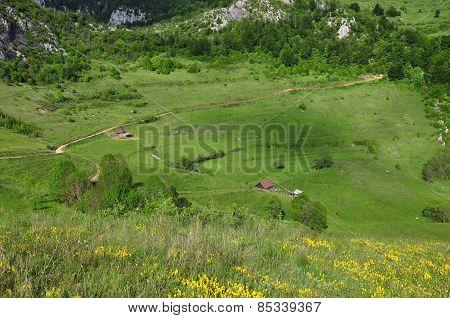 Green Vibrant Pasture