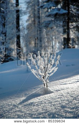 Snow Covered Plant