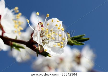 Spring border background with white blossom close-up