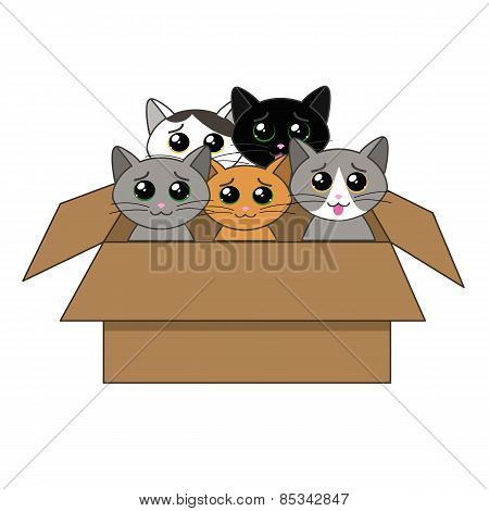 Box Of Kittens.ai