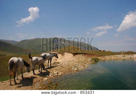 Three Horses Grazing Near The Mountain Lake
