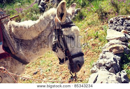 Donkey With A Cart Standing On A Hot Summer Day