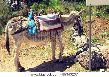 Donkey Worth Waiting Tied To A Post On A Hot Day