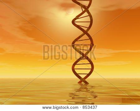DNA landscape