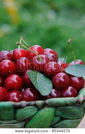 Basket Of Fresh Ripe Cherries On The Wooden Table