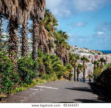 Santa Cruz De Tenerife. Tenerife, Canary Islands, Spain