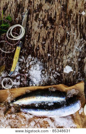 Fresh fish herring fillet