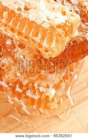 Yellow Honeycomb Slice