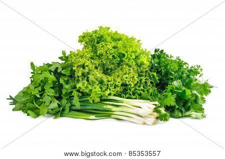 Fresh Green Foliage On A White Background. Parsley, Cilantro, Onions, Arugula And Lettuce