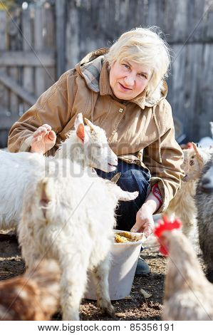 happy woman is feeding little goats and chickens o
