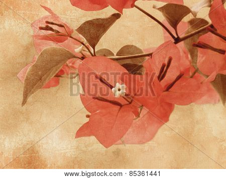 Bougainvillea - vintage flower background - digital oil painting