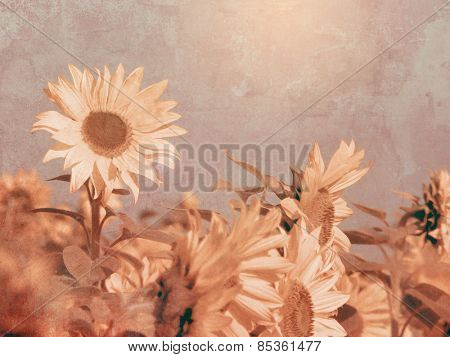 Vintage sunflower field with soft oil painting texture