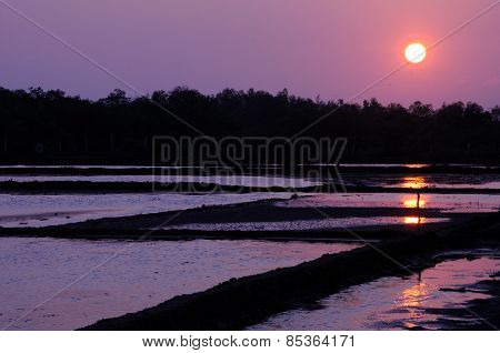 Sunset over a rice paddy