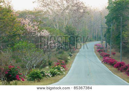 Flowers Bougainvillea