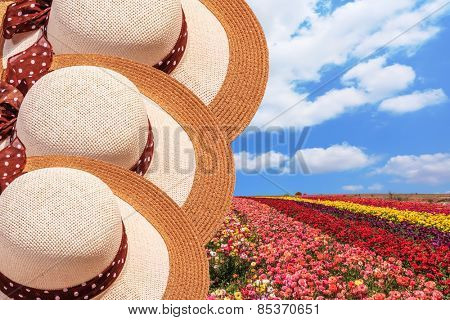 Bright festive colorful blooming field of buttercups. Beautiful elegant wide-brimmed hats decorated with spring Easter landscape