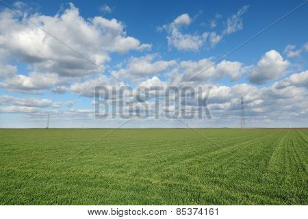Agricultural Scene, Wheat Field
