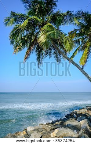 Palms on a background of blue sky