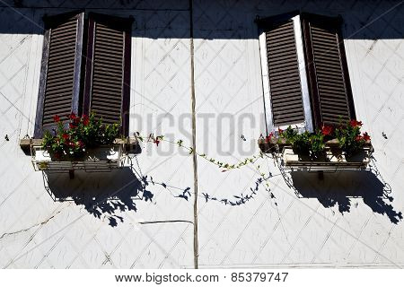 Terrace Europe  Italy    In  The Milano Old     Flower