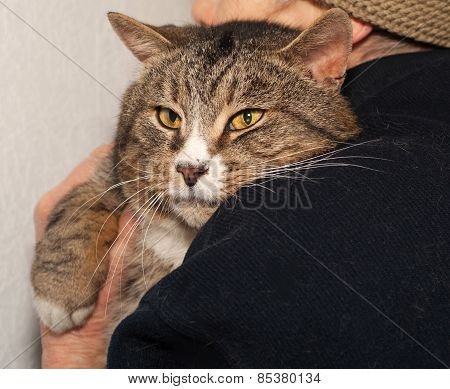Tabby Cat Peeking Over Shoulder