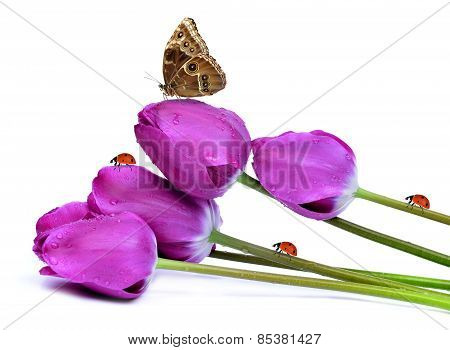fresh purple tulips with butterfly and ladybugs