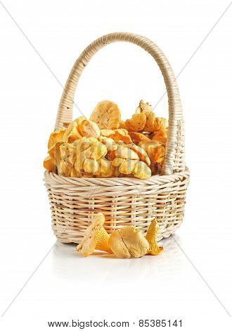 Chanterelles In A Basket On A White Background