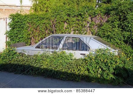 The abandoned and immobile car standing in the weeds