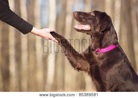 dog gives paw