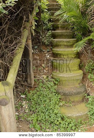 Staircase Into Tropical Jungle