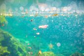 pic of cenote  - Mexican cenote underwater - JPG
