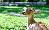 pic of antlers  - The Deer  - JPG