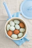 pic of saucepan  - Fresh light green eggs from Easter egger chicken and brown eggs in a saucepan - JPG