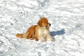 Brown Dog Sitting In The Snow On A Bright Winter Day poster