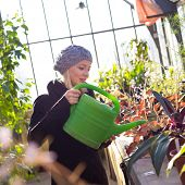 picture of greenhouse  - Portrait of florists woman working with flowers in a greenhouse holding a watering can in her hand. Small business owner. ** Note: Soft Focus at 100%, best at smaller sizes - JPG