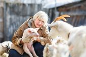 stock photo of pig  - Fun adult woman holding a small pig on the farm - JPG